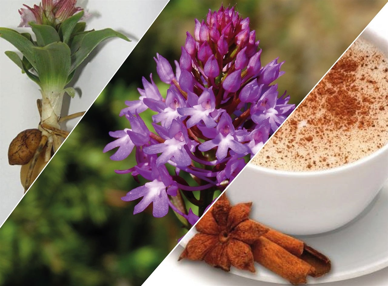 salep-header.jpg
